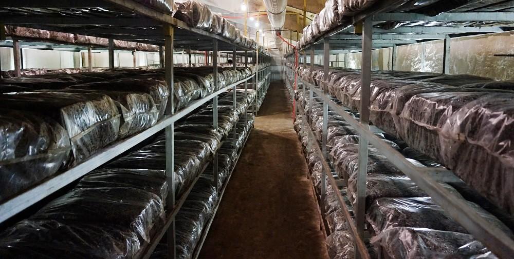 Выращивание шампиньонов как бизнес — план с расчетами